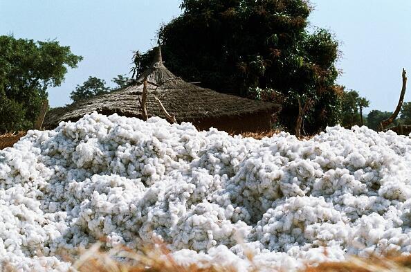 Au Mali, la filière du coton fait vivre 4 millions de Tchadiens.