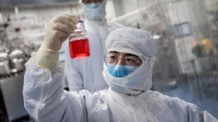 Un investigador examina un frasco que contiene células de un mono durante un test para una vacuna experimental contra el nuevo coronavirus, en un laboratorio de Sinovac Biotech, en Pekín, el 29 de abril de 2020