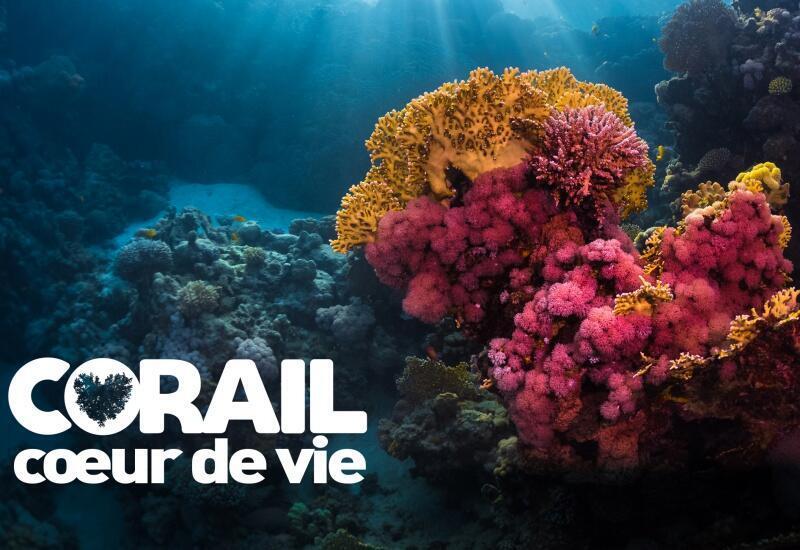 Affiche de l'exposition «Corail Coeur de vie» à voir à l'Aquarium de Paris.