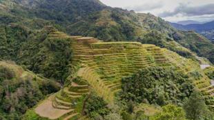 Les rizières de Banaue, aux Philippines.
