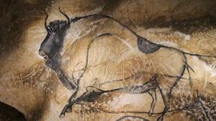 Bison. Grotte Chauvet.