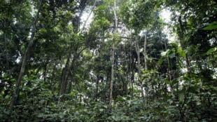 La forêt de la réserve de Lesio Louna, à 140km au nord de Brazzaville (Photo d'illustration).