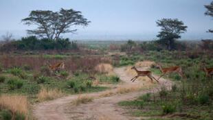 Vue du parc national des Virunga, province du Nord-Kivu, à l'est de la République démocratique du Congo.
