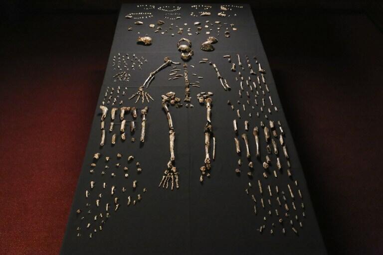 En Sudáfrica investigadores internacionales presentaron a la prensa osamentas del Homo Naledi descubiertas en una cueva cerca de Johanesburgo.