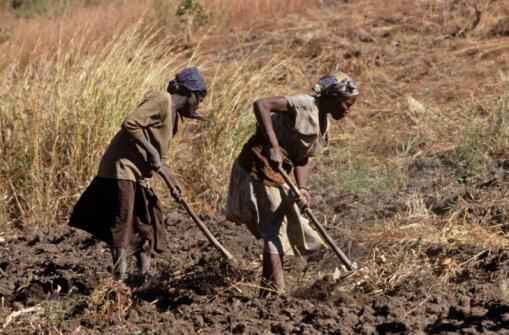 Agricultores que vivem da sua própria produção