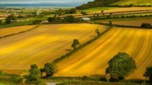 Paysage de champs de blé.