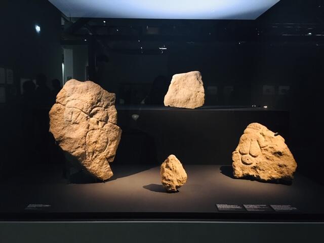 Những mẫu hóa thạch có niên đại vài chục ngàn năm.
