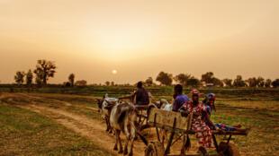 Des agriculteurs au Nigeria (photo d'illustration)