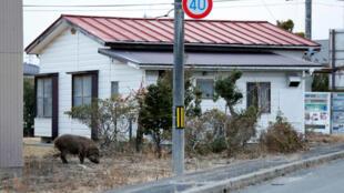 Một vùng bị phóng xạ tại khu vực nhà máy Tepco.