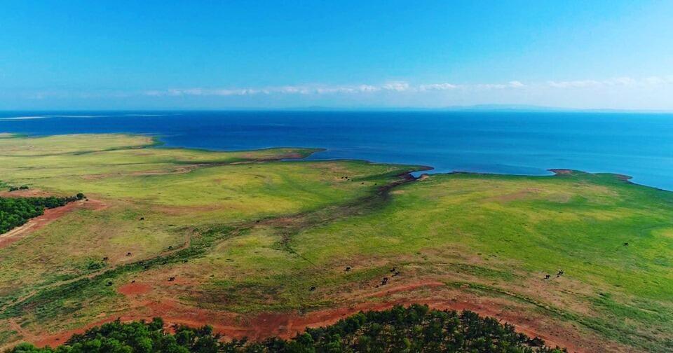 Falling water levels in Lake Kariba have exposed rich grasslands at Matusadona National Park, Zimbabwe