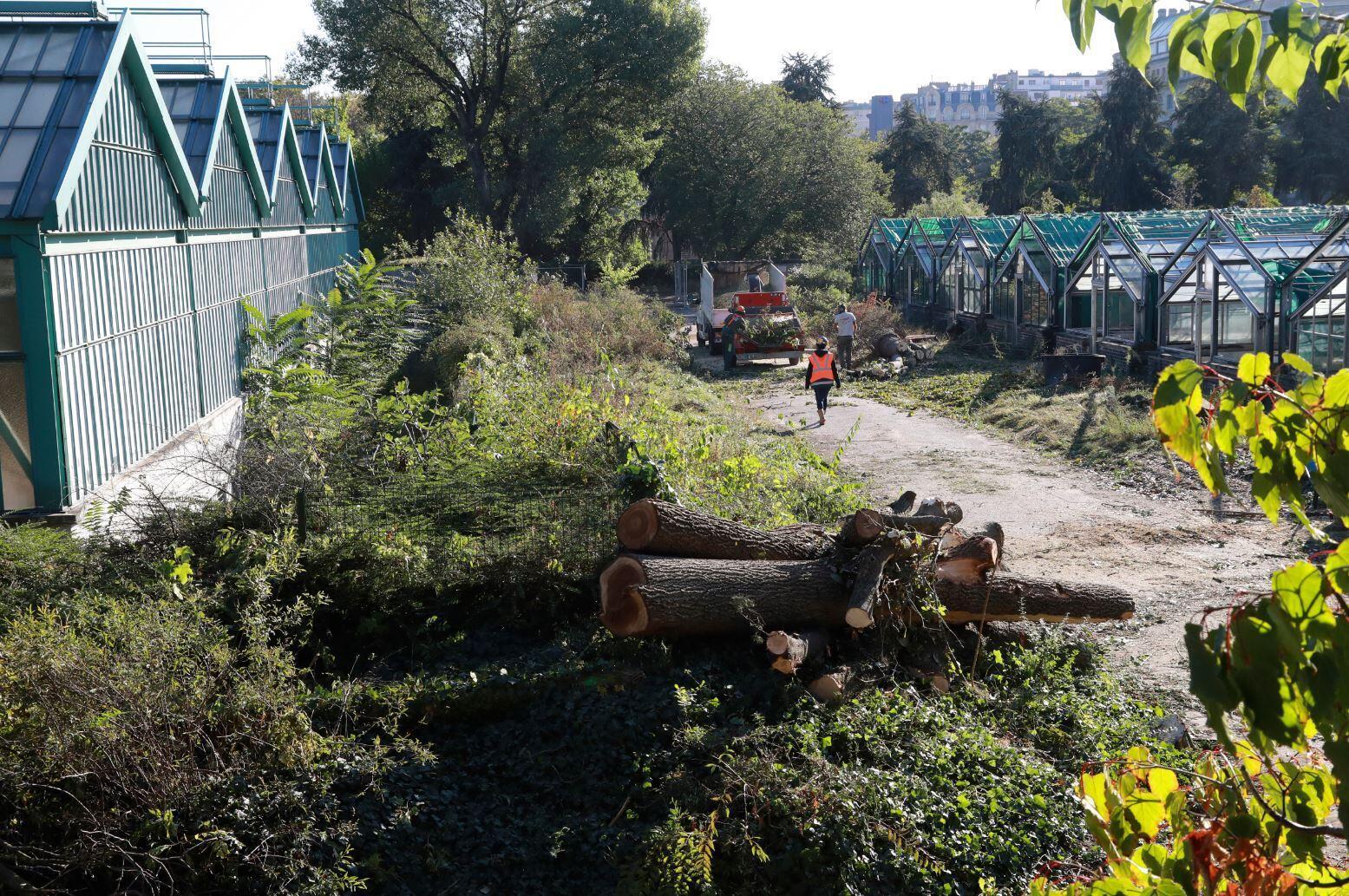 В саду Отей рубят деревья перед расширением стадиона Roland Garros, октябрь 2016 года
