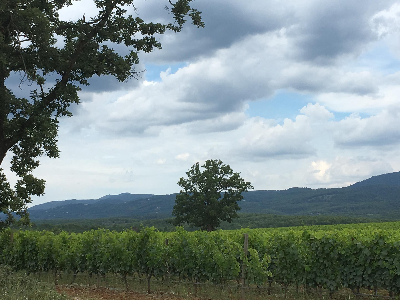 143 га виноградников Château de Berne