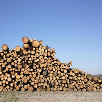 Plusieurs pays du Bassin du Congo ont décidé de ne plus exporter de grumes sorties de leurs forêts.