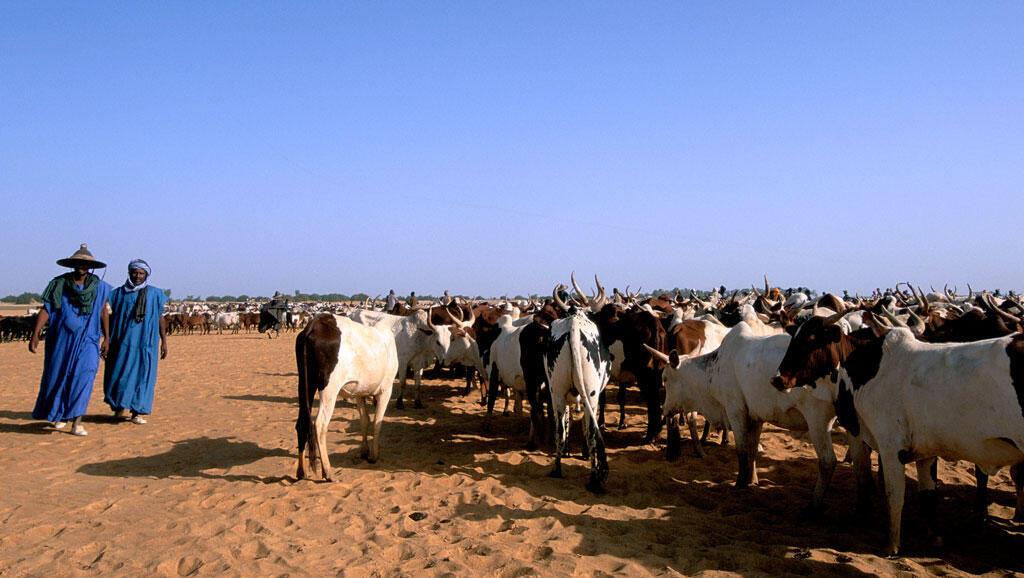 Une transhumance au Mali (Photo d'Illustration).