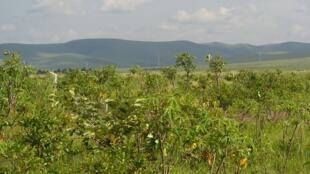 Le parc national de Nsele est situé à une quarantaine de kilomètres de Kinshasa.