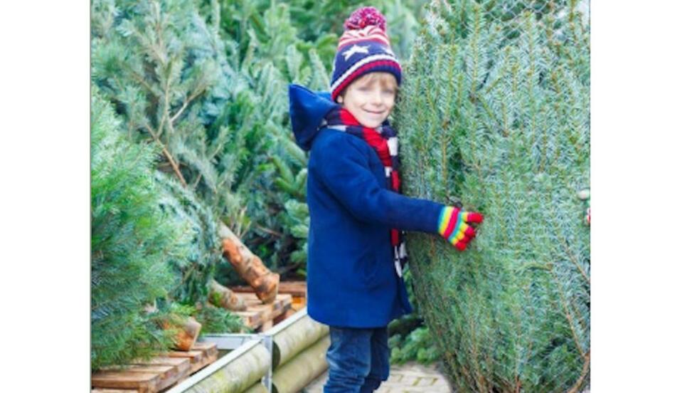 Mùa Noel lại về khi trong nhà thơm ngát mùi hương cây thông.