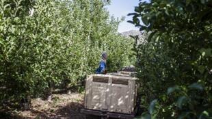 La coopération entre fermiers est nécessaire et se base sur le volontariat. Le gouvernement donne parfois du matériel aux nouveaux fermiers noirs, les programmes de formations sont encore trop rares pour leur permettre une bonne gestion de leur terre.