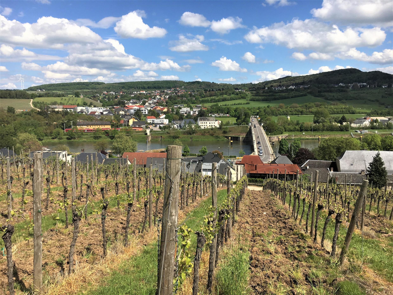 Au premier plan, les vignobles et le village de Schengen ; au-delà du pont, à gauche, l'Allemagne, à droite, la France.