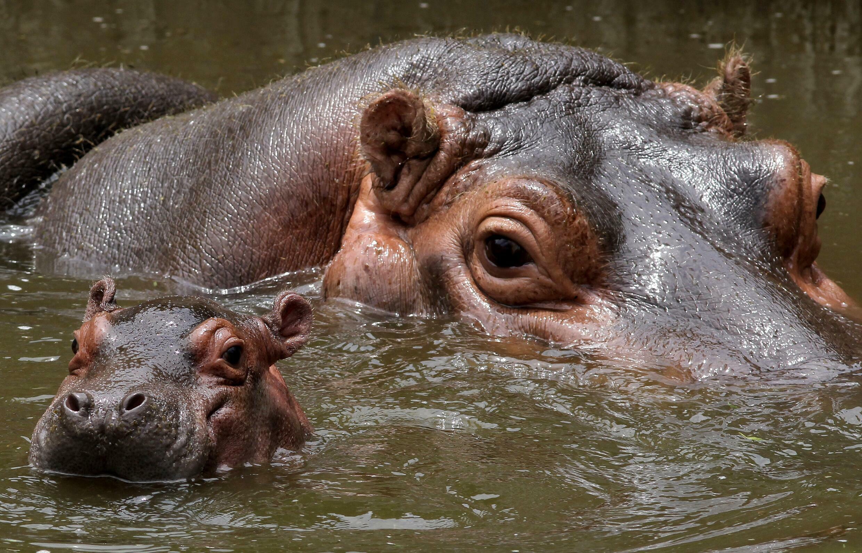 Una sustancia tóxica supuestamente vertida en Angola dejó un río rojo en República Democrática del Congo, y podría estar relacionada con la aparición de cuerpos de hipopótamos y otras especies muertos.