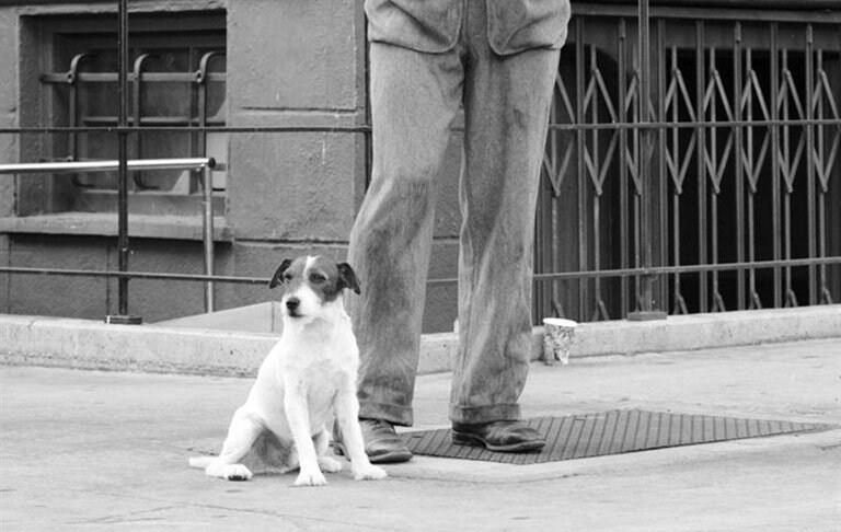 Uggy é um ator experiente, com doze filmes em seu currículo.