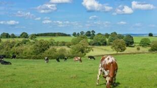 En Francia, cada semana desaparecen 200 granjas y 1300 hectáreas de tierras agrícolas son recubiertas con concreto (fuente: Terre de Liens).