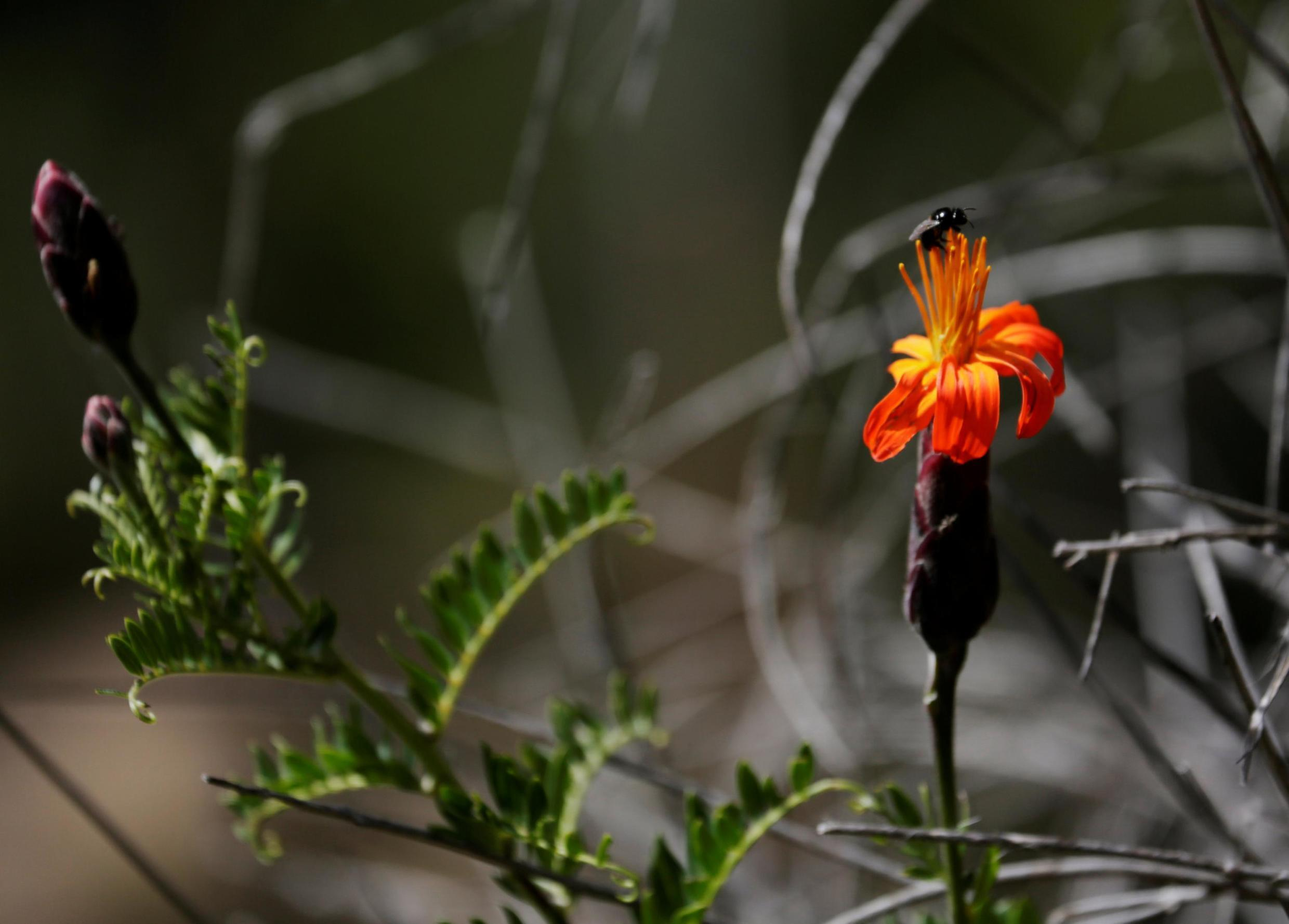 An insect on the flower is seen at the Auquisamana park on t6he outskirts of La Paz, Bolivia, April 29, 2019. An app challenge has inspired La Paz residents to document biodiversity.