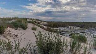 En la Costa del Ópalo, al norte de Francia, la reserva biologica estatal es un laboratorio a cielo abierto.