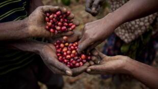 La consommation de café pourrait rapporter jusqu'à 2 millions d'euros au secteur.