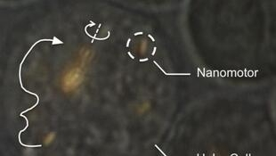 Des nanomoteurs insérés dans des cellules.