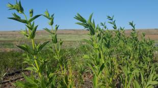 A Chypre, l'agriculture bio est de plus en plus dans le vent.