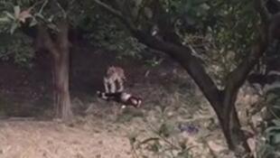 宁波野生动物园发生老虎伤人事件2017年1月29日