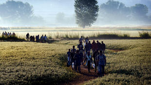 Syrian migrants walk through a field to cross the Greece-Macedonia border on August 29, 2015 on the long Balkan route to Western Europe