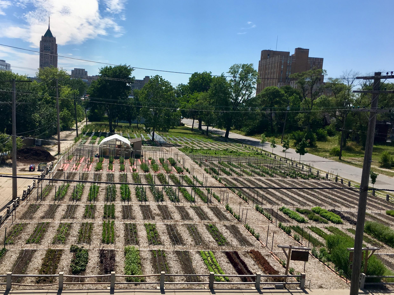10 000 bénévoles, 300 légumes cultivés : la ferme urbaine de Détroit a du succès.