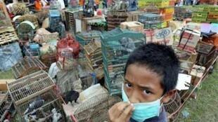 Đề phòng nhiễm H5N1
