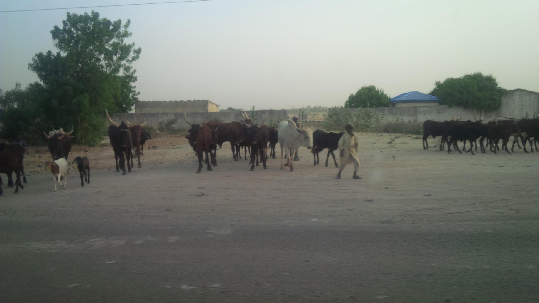 An sace Shanun Fulani sama da dubu goma a rikicin Boko Haram