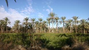 En Tunisie, les 600 hectares de l'oasis de Gabès et sa biodiversité sont menacés par les constructions anarchiques.