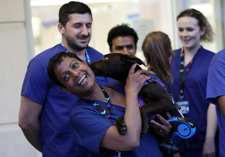 coronavirus - Royaume-Uni - NHS - soignant - chien