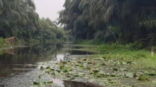 Sur les rives de la Rivière Noire d'Adjarra, au Bénin.