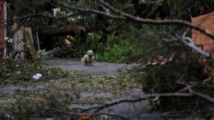 Из-за урагана «Мария» остров Пуэрто-Рико, славящийся своими живописными пляжами, объявлен зоной стихийного бедствия