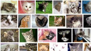 Première recherche dans la catégorie animal : les chats.