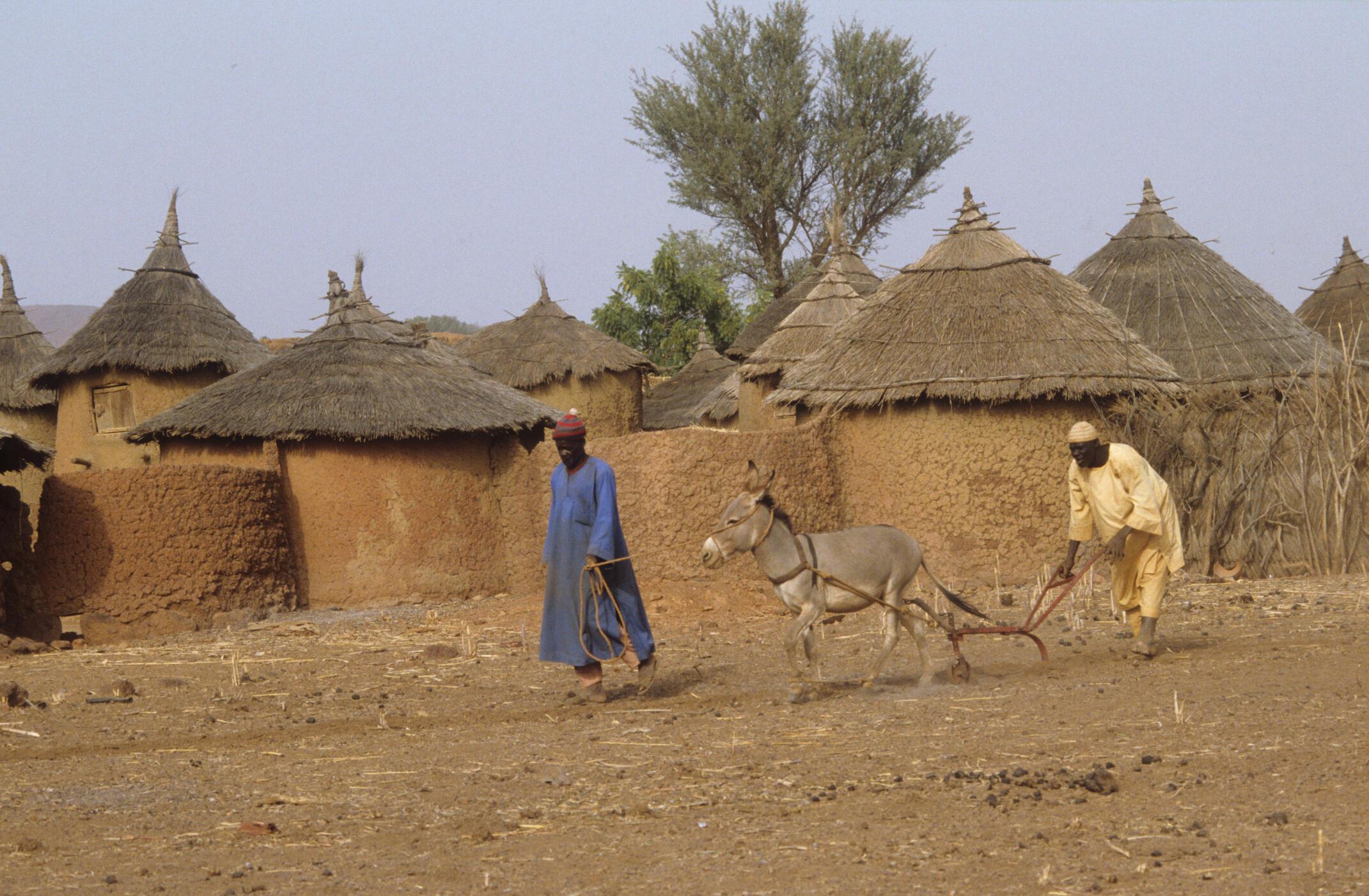 Des agriculteurs bukinabès.