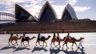 Парад верблюдов перед Сиднейским оперным театром
