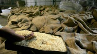 Le Gabon consomme du riz uniquement importé. (photo d'illustration)