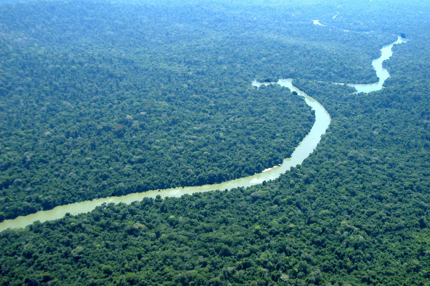 Especialistas destacam que o Brasil poderia ser uma potência ambiental do século XXI se protegesse melhor suas florestas