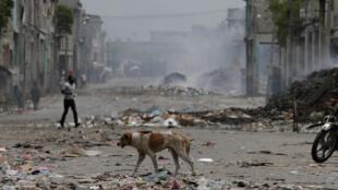 Un chien marche dans une rue déserte à Port-au-Prince, ce lundi 10 juin 2019, au lendemain d'une manifestation qui s'est terminée dans la violence.