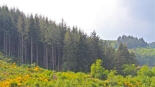 Plantação derrubada fica na floresta de Morvan.