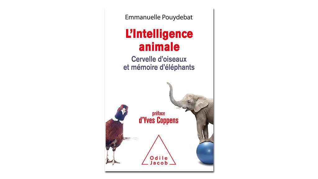«L'intelligence animale», d'Emmanuelle Pouydebat.