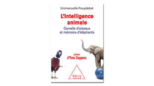«L'intelligence animale», d'Emmanuelle Pouydebat.