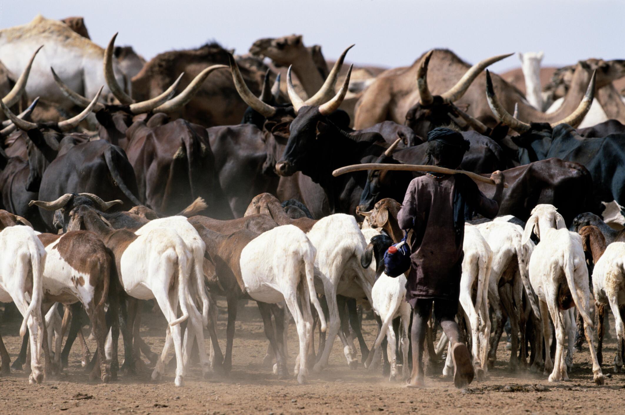 Makiyaya a Jamhuriyyar Nijar yankin Sahara