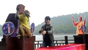 """Chú khỉ """"tiên tri"""" dự đoán Donald Trump chiến thắng, ngày 03/11/2016 tại Trường Sa (Changsha), Trung Quốc."""